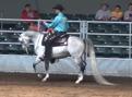 TAMAR ADAGIO #633507 (Neposzar+ x LW Gradyna) 2005 grey gelding bred by Tamar Arabians/ Tamara K Hanby
