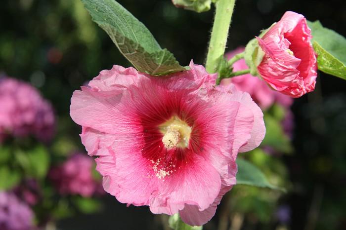 Garden 2012 July 2