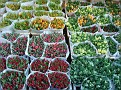 Bloemenmarkt (10)
