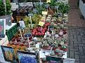 Bloemenmarkt (4)