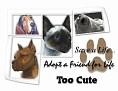 dcd-Too Cute-Adopt a Friend.jpg