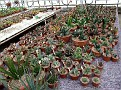 28 Gasteria collection. overzicht